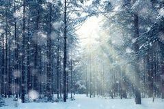 Magiczny zima las, bajka, Obrazy Royalty Free
