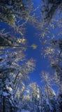 Magiczny zima las od niskiego punktu Obrazy Stock