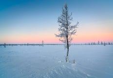 Magiczny zimno zakrywający zimy drzewo Obraz Stock