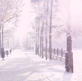 Magiczny zimy miasta park jarzy się światłem słonecznym Śnieżny miasteczko krajobraz Piękni drzewa w mrozowym Backlighting słońca Zdjęcia Stock