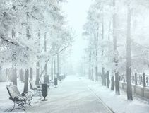 Magiczny zimy miasta park jarzy się światłem słonecznym Śnieżny miasteczko krajobraz Piękni drzewa w mrozowym Backlighting słońca Obrazy Stock