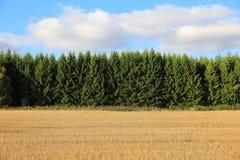 Magiczny zmierzch nad pszenicznym polem Obraz Stock