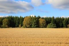 Magiczny zmierzch nad pszenicznym polem Obrazy Stock