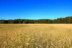 Magiczny zmierzch nad pszenicznym polem Fotografia Royalty Free