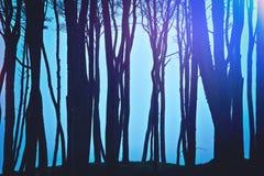 Magiczny zmrok i tajemniczy las Zdjęcie Royalty Free