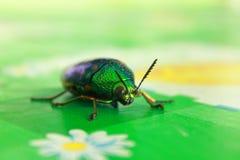Magie de coléoptère Photographie stock