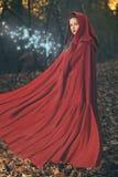 Magie de forêt Photo stock