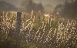 Magie de nature photographie stock