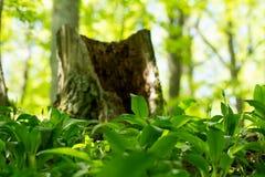 magie de vert de forêt Photo libre de droits