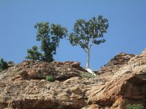 Magie de wow de la nature les arbres et la roche photos stock