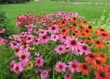 Magie des Blühens blüht an einem sonnigen Sommertag Stockbild
