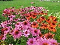 Magie des Blühens blüht an einem sonnigen Sommertag Lizenzfreies Stockbild