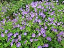 Magie des Blühens blüht an einem sonnigen Sommertag Stockfotos