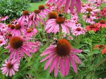Magie des Blühens blüht an einem sonnigen Sommertag Lizenzfreies Stockfoto