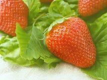Magie des fraises Photos libres de droits