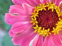 Magie und Schönheit in einer einzelnen Blume lizenzfreies stockbild