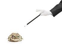 Magier, der einen magischen Stab und einen Frosch anhält Stockfotos
