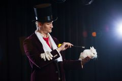 Magier mit Kaninchen, Jongleurmann, lustige Person, schwarze Magie, Illusion auf einem schwarzen Hintergrund lizenzfreie stockbilder