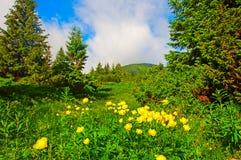 Magiguling blommar på sommarberget dramatisk mulen sky Arkivfoto