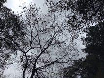 Magin av naturen Arkivbilder