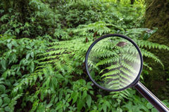 maginfier glass. fern in Doi Inthanon National Park, Chiang mai, Stock Images