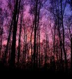 Magisch bos Stock Afbeelding