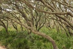 Magisch bos in de herfstseizoen Royalty-vrije Stock Afbeelding