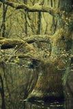 Magisch de lentebos Stock Afbeeldingen