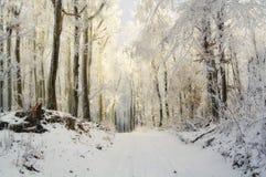 Magisch de winterbos bij zonsondergang royalty-vrije stock foto's