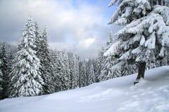 Magisch de winterhout dat met verse sneeuw wordt behandeld stock foto