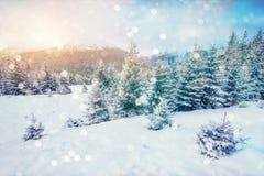 Magisch de winterlandschap, achtergrond met sommige zachte hoogtepunten a Royalty-vrije Stock Afbeeldingen