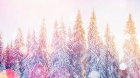 Magisch de winterlandschap, achtergrond met sommige zachte hoogtepunten a Stock Afbeelding