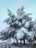 Magisch die de winterlandschap in een park met een vijver en pijnbomen met de eerste pluizige sneeuw wordt behandeld royalty-vrije stock afbeeldingen