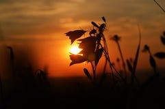 Magisch eind van de zonnige dag in mooie aard stock afbeeldingen