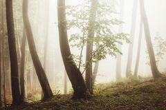 Magisch fantasiebos met mist stock afbeelding
