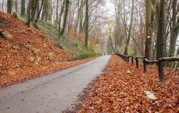 Magisch kleurrijk de herfstbos Royalty-vrije Stock Afbeeldingen