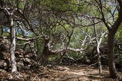 Magisch Landschap Forest Trees en takken Stock Foto