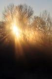 Magisch licht landschap Stock Afbeeldingen