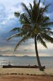 Magisch strand onder de palm Royalty-vrije Stock Foto's