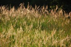 Magisch Uur op een Grasrijk Gebied Stock Afbeelding