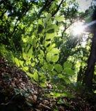 Magisch zonlicht in het bos Royalty-vrije Stock Afbeelding