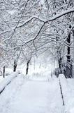Magische Ansicht des Winter-Parks Lizenzfreies Stockfoto