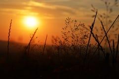 Magische avondzonsondergang in aard stock foto's