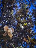 Magische bloem op de boom stock afbeelding
