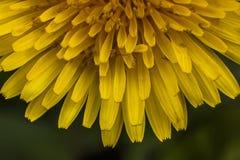 Magische bloemblaadjes Royalty-vrije Stock Foto's