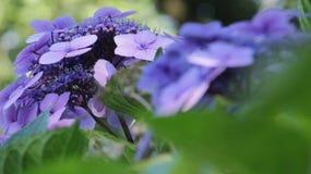 Magische bloemen Stock Afbeeldingen