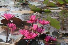 Magische bloemen in het meer royalty-vrije stock afbeelding