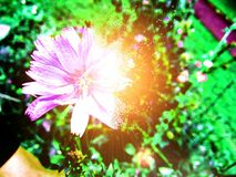 Magische Blume Lizenzfreies Stockbild