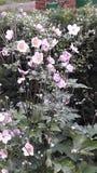 Magische Blumen Stockbild