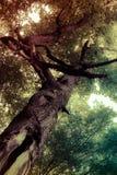 Magische boom Stock Afbeeldingen